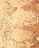 Snake Print One Shoulder Crop Top in Oranje